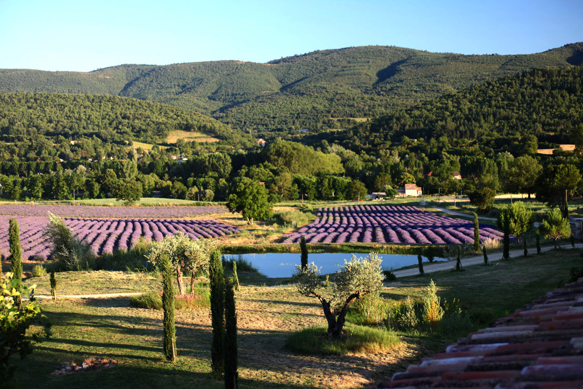 Luberon, beautiful hamlet renovated on 10 ha of land including 5 ha of lavender fields, superb view …