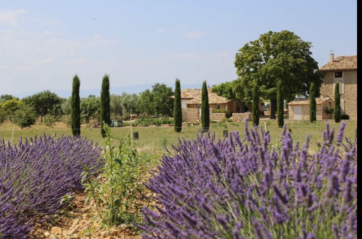 2279 : Haut Provence, Magnificent old sheepfold, 370m² living space, independent apartments, truffles, olives …